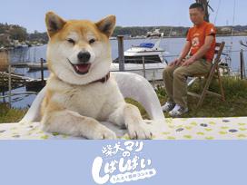 柴犬マリのしばしばい ~1人と1匹のコント集~
